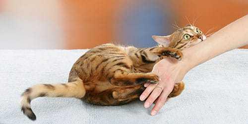 Кошка кусает сонник – Сонник кошка кусает к чему снится кошка ...